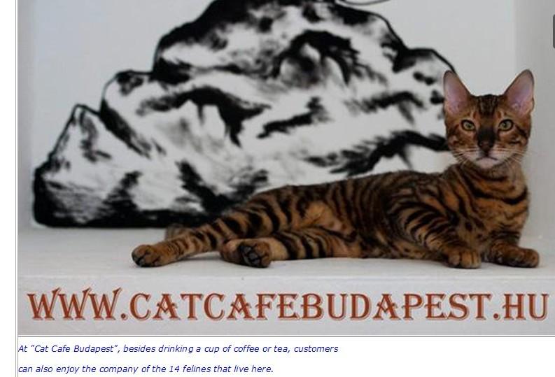 CAT1-A